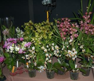 11e Salon des orchidées